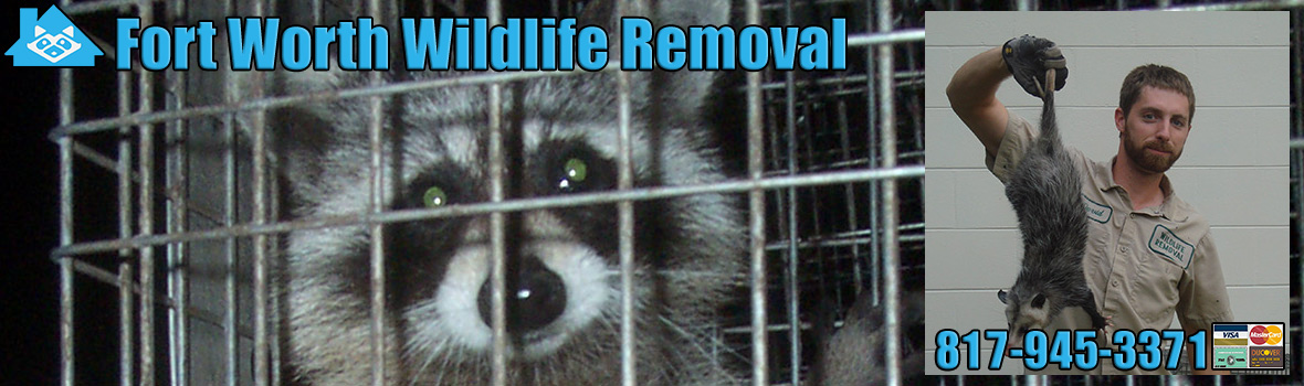Fort Worth Wildlife and Animal Removal